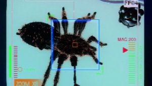 Spider – PAL_-_02